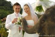 Weddings-22