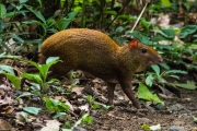 Wild Life at Nicoya Peninsular