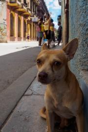 Cuba - Havana-105