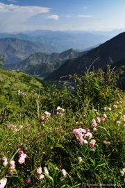 Himachal Pradesh-38