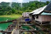 Khao Sok Nationalpark-27