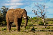 South Africa-31
