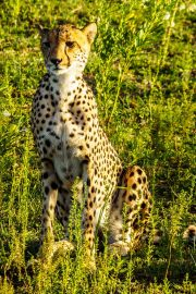 South Africa-36