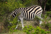 South Africa-26
