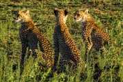 South Africa-37