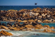 South Africa-52