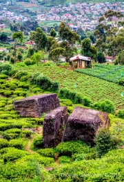 Sri Lanka-63.jpg